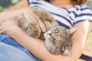 Cats are ideal apartment pets!   #hugyourcatday #smartsolutions #apartments #michigan #propertymanagement #marketing #staffing #education #teamwork #staffing #maintenancepersonnel #annarbormichigan #smarties #communication